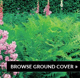 browse-ground-cover