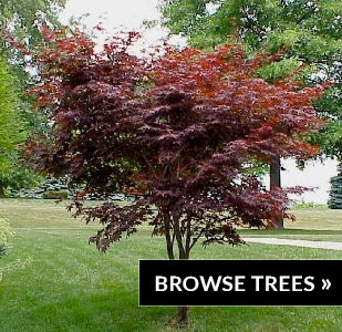 browse-trees