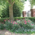Landscaping Maintenance - Hutcheson Horticultural - 21