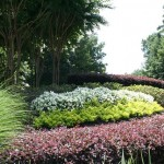 Landscaping Maintenance - Hutcheson Horticultural
