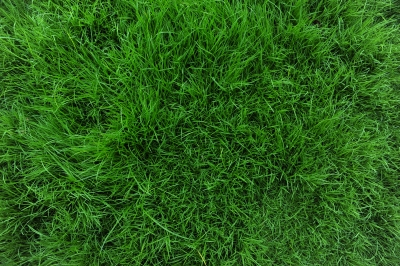 Lawn Maintenance Atlanta GA