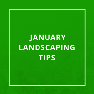 January Landscaping Tips