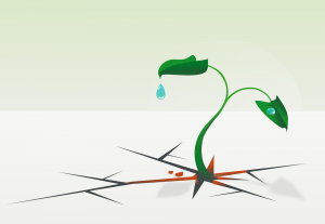 drown plant