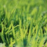 August Lawn Tips