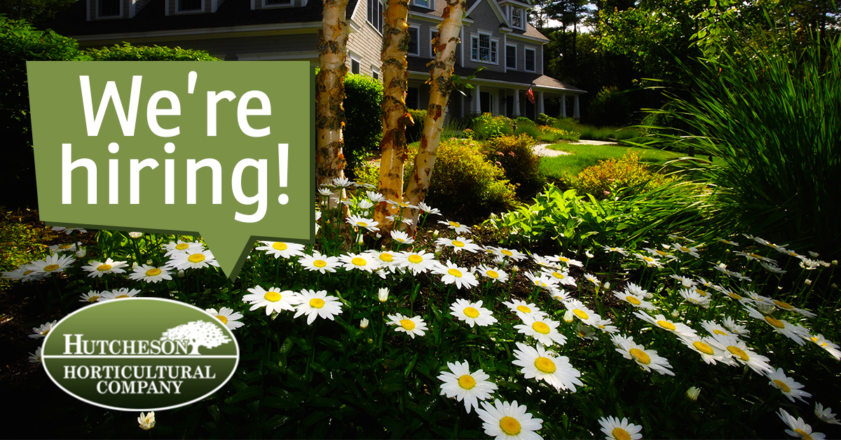 Hiring Lawn Care Professionals